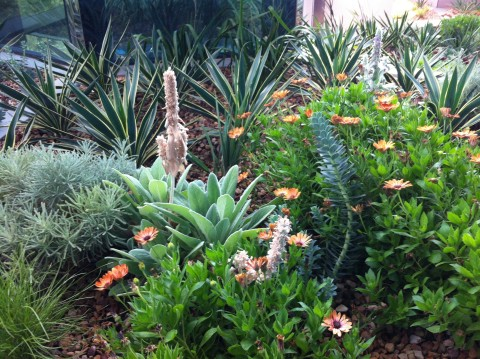 This native garden is pretty good, too